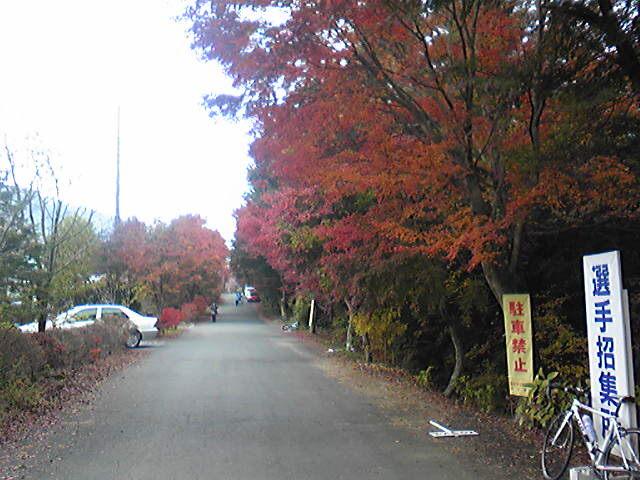 見事な紅葉。
